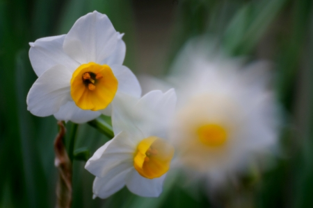 ほのかな春の香り