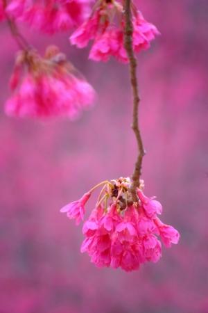 春を先駆ける