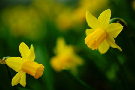 春を奏でる