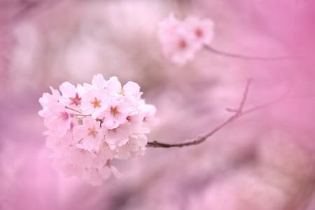 優しい春風の香り