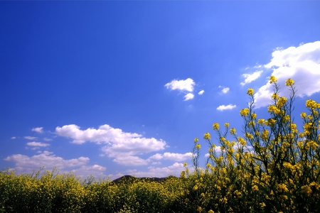 春色の大地