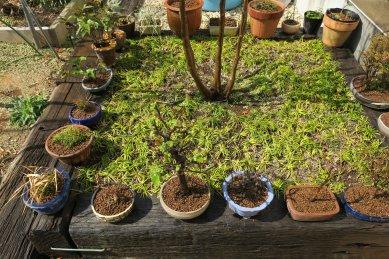 植替え後のミニ盆栽など小物鉢