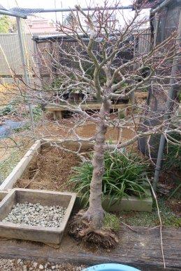 根の整理後