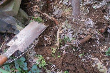 鉢縁からの脱走根を切る