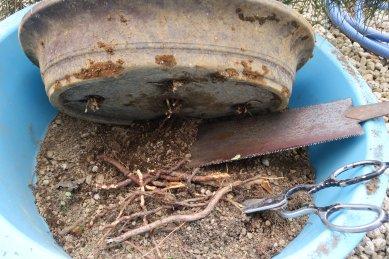 鉢底穴からの脱走根の切断