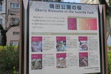 墨田公園の桜