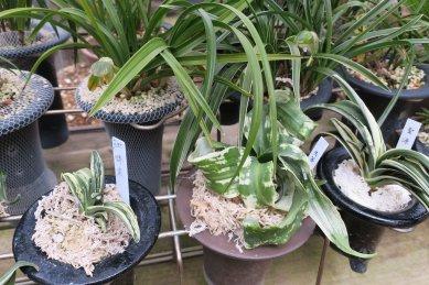 古典植物棚