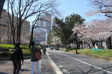 逓信病院前あたりの桜