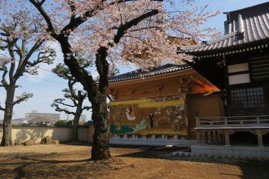 1祐天寺・仏舎利殿前の桜