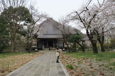九品寺の桜