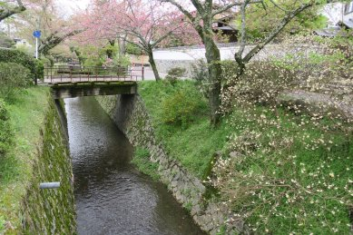 哲学の道・大豊神社近く