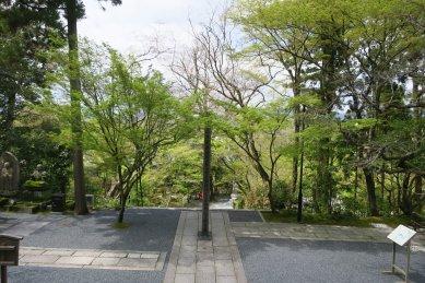 永観寺・御影堂から見た楓林