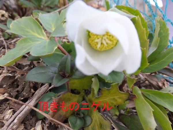 DSCF3842_1.jpg