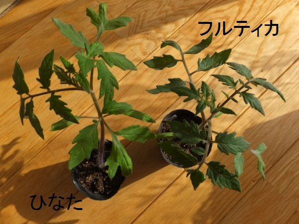 DSCF4041_1.jpg