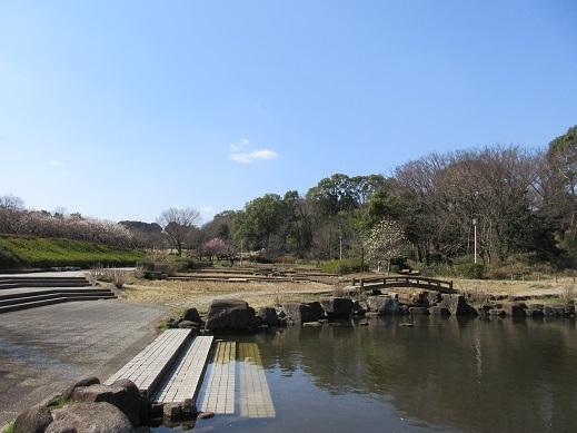 日本庭園池より