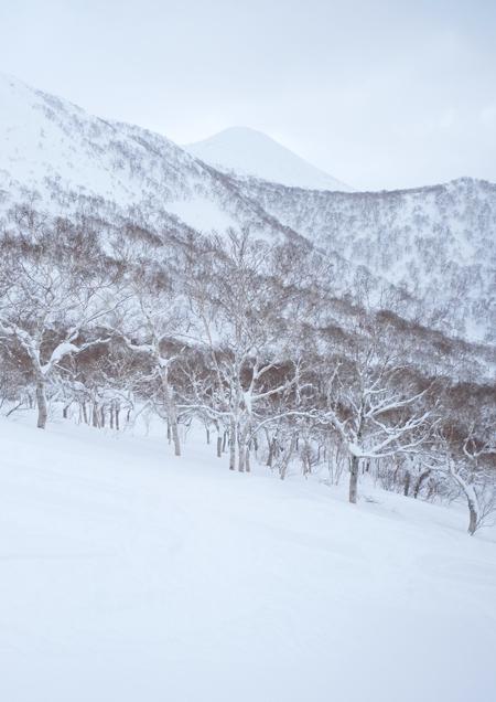 奥ニセコ 白樺山02