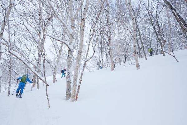 奥ニセコ 白樺山06