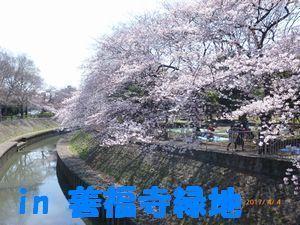 善福寺緑地