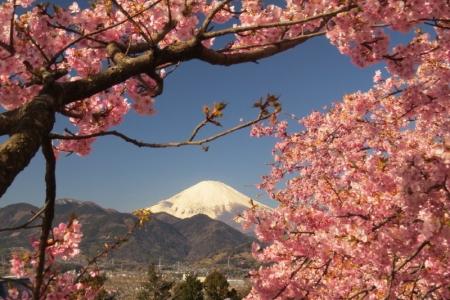 富士山&さくら景色d_1