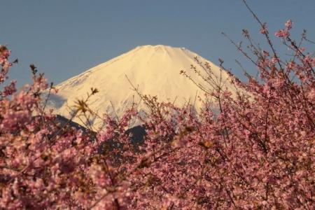 富士山&さくら景色bb_1