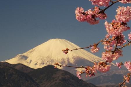 富士山&さくら景色c_1
