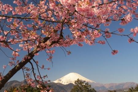 富士山&さくら景色ab_1