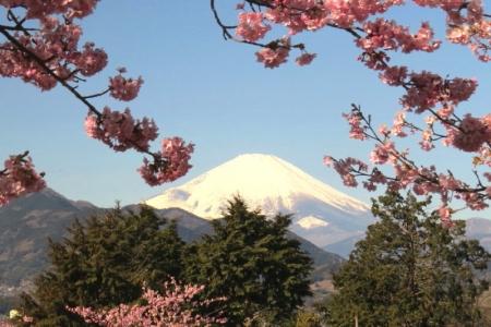 富士山&さくら景色aa_1