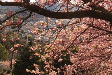 西平畑公園からの眺望a_1