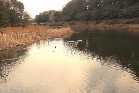 しらかしの池a_1のコピー