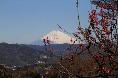 小室山からの富士山1_1