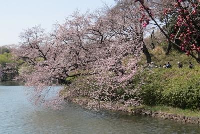 三ツ池桜v_1