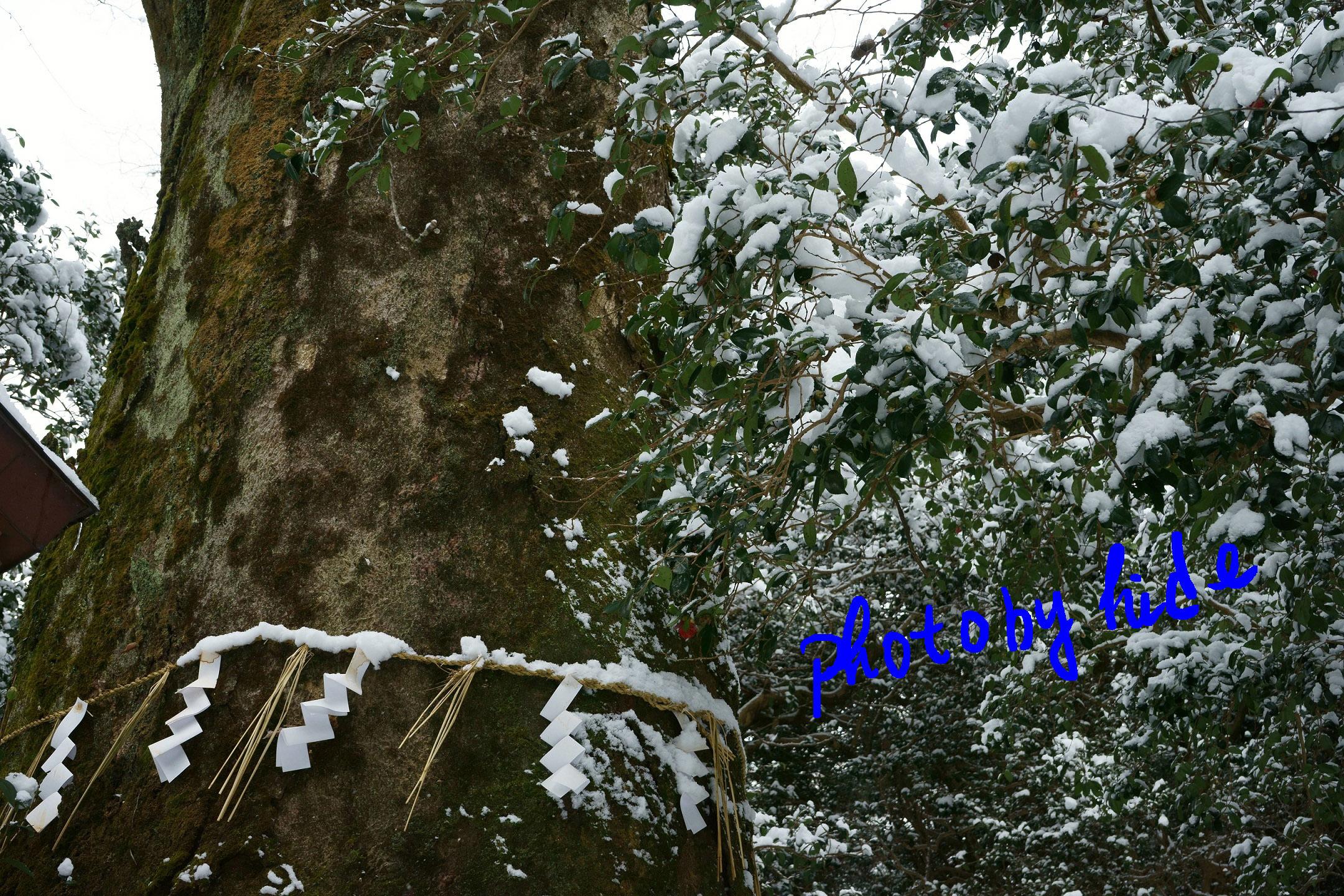 花尻の森2