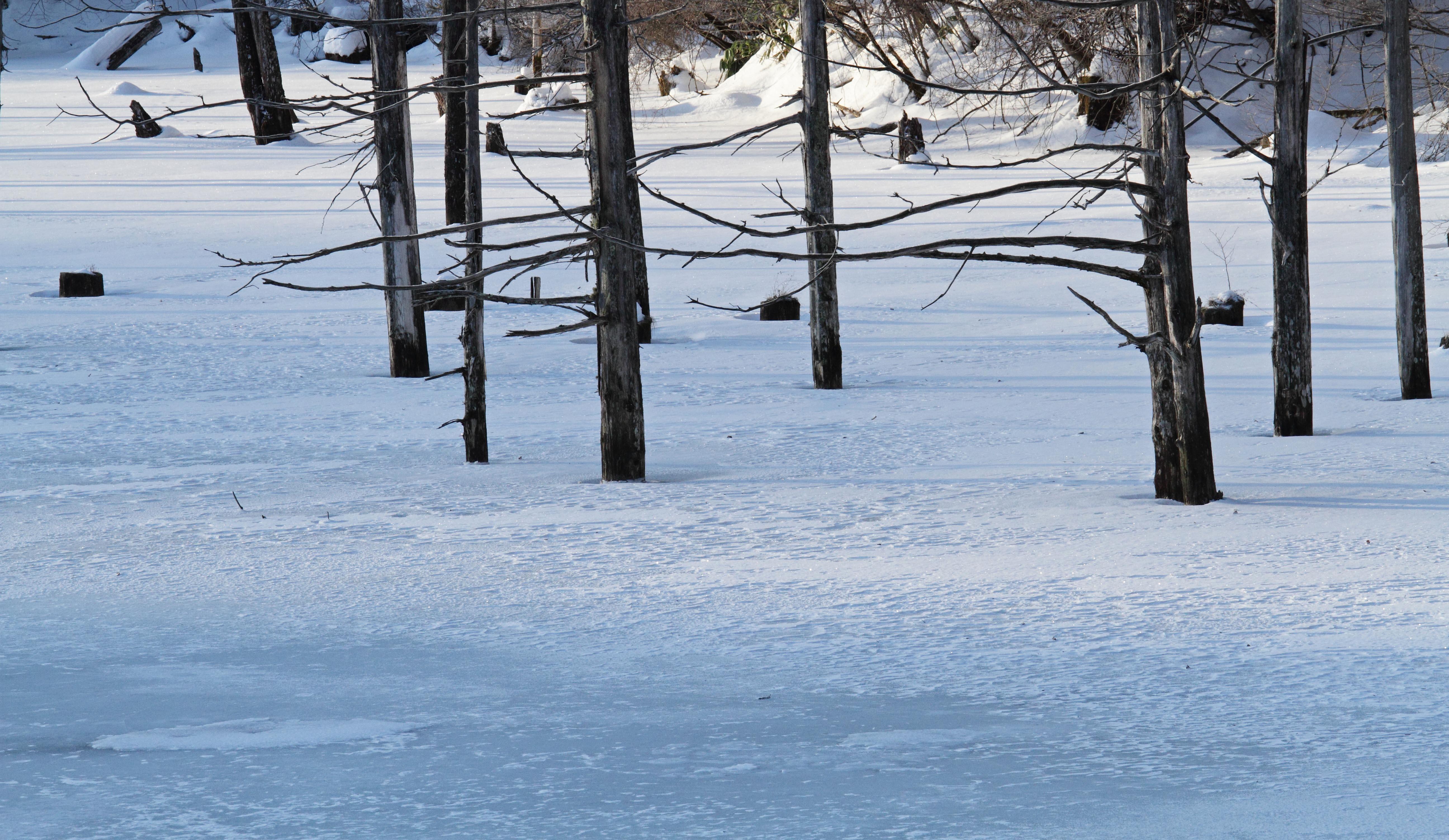 自然湖朝6