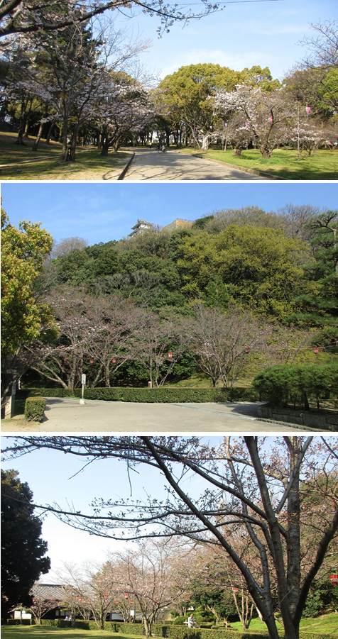 20170404丸亀城 桜2