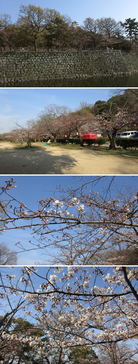 20170404丸亀城 桜1