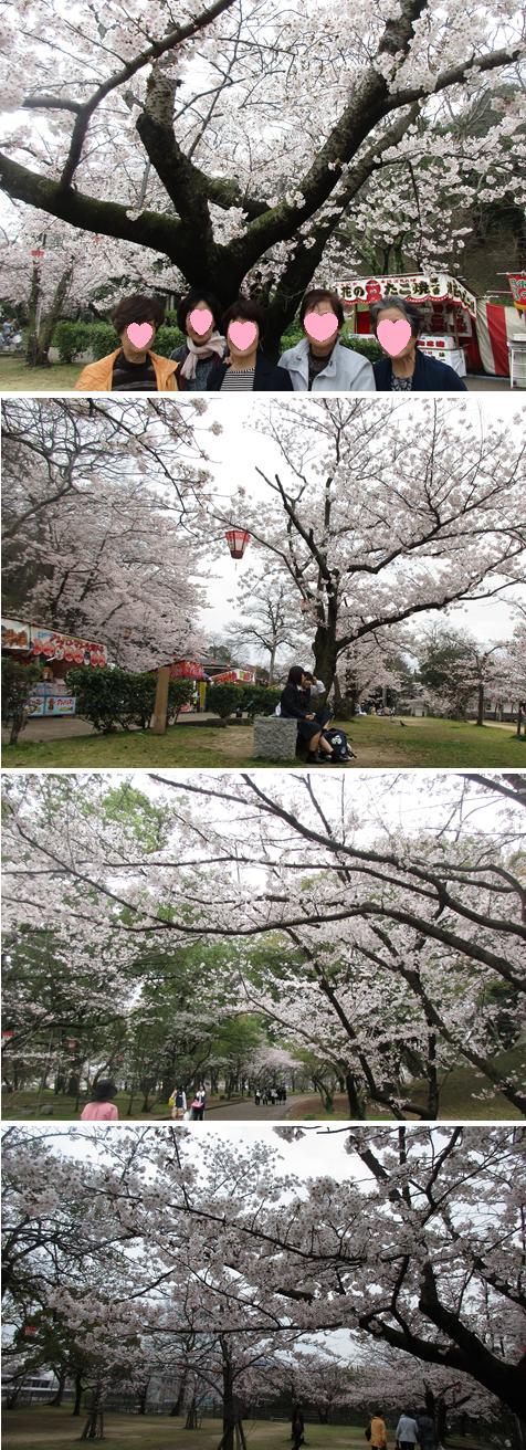 20170407丸亀城桜
