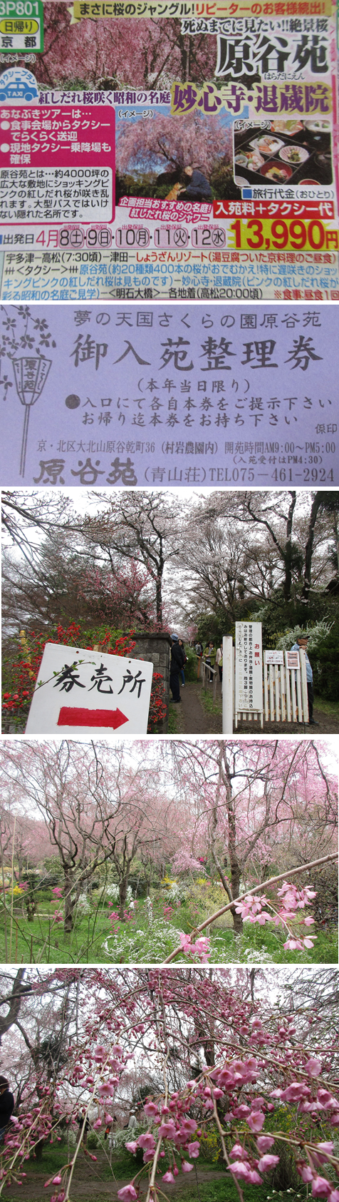 20170410原谷苑1