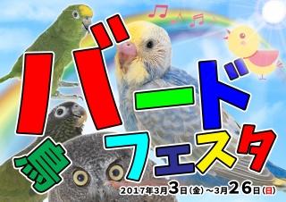 【POP】バードフェスタ20170303