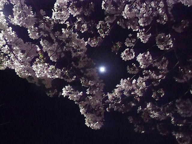 月見に花見