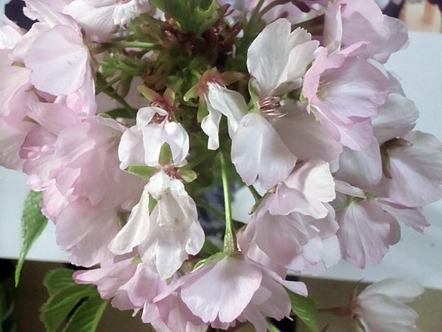 花を間近に見ながら