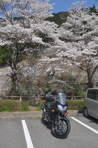 yoshinoyama290414004_R.jpg