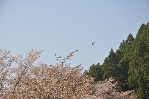 yoshinoyama290414014_R.jpg