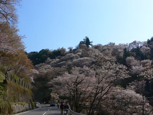 yoshinoyama290414021_R.jpg