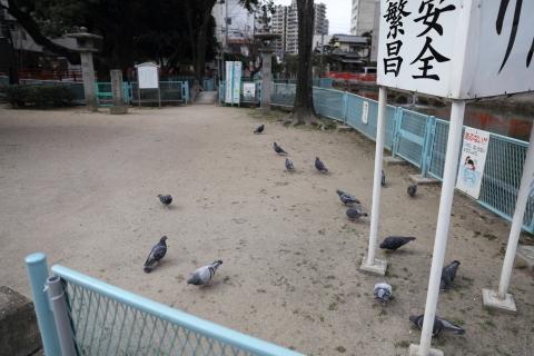 20170211hatosumi.jpg
