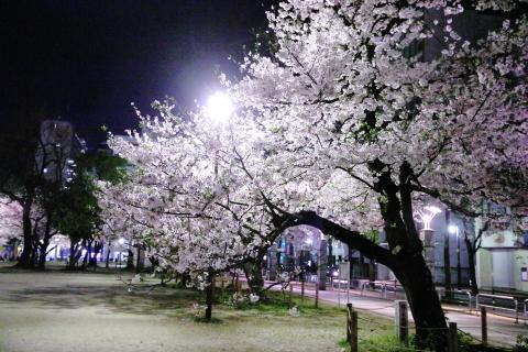 20170410yozakura2.jpg