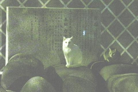 20170418cats.jpg