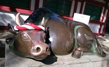 太宰府の牛