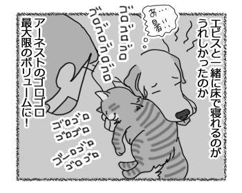 03032017_dog4.jpg