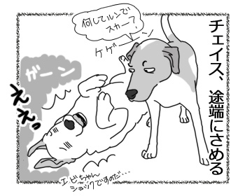 05042017_dog4.jpg