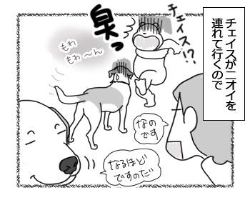 06032017_dog4.jpg